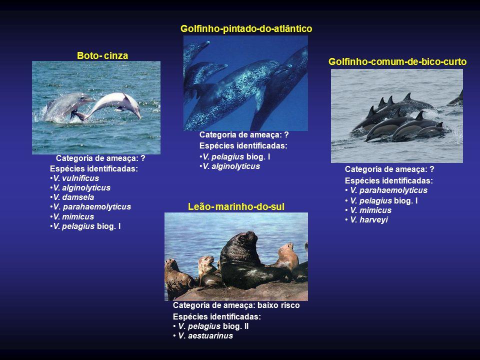 Golfinho-pintado-do-atlântico Golfinho-comum-de-bico-curto