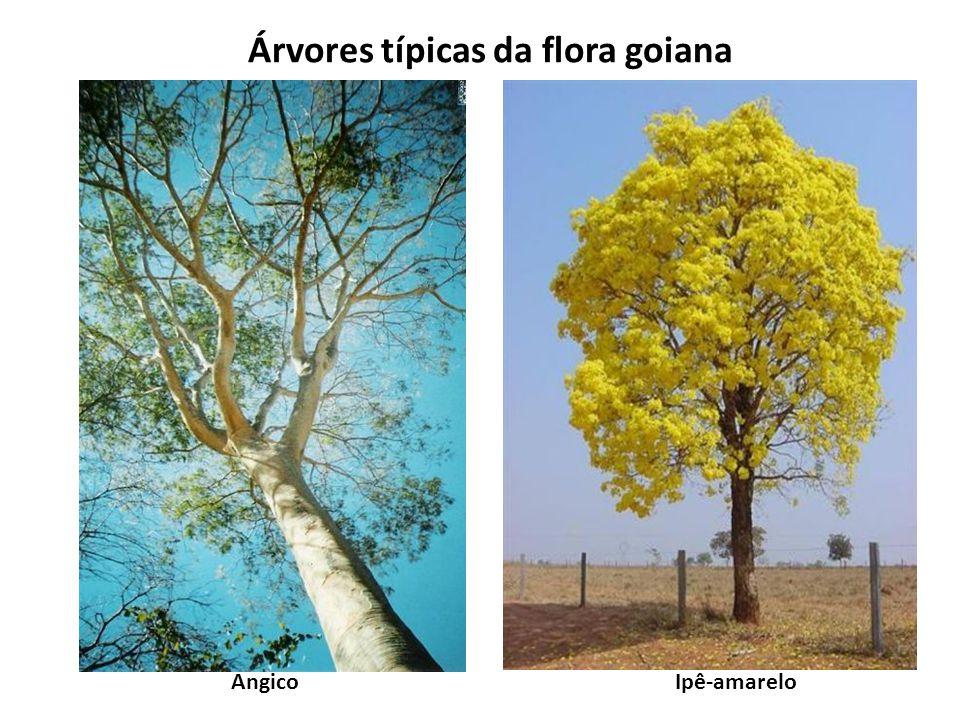 Árvores típicas da flora goiana