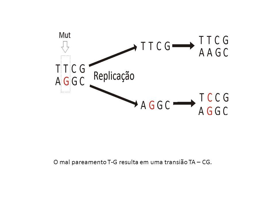 O mal pareamento T-G resulta em uma transião TA – CG.