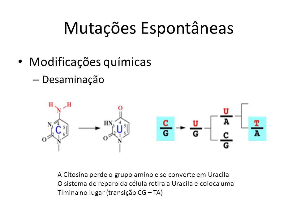 Mutações Espontâneas Modificações químicas Desaminação