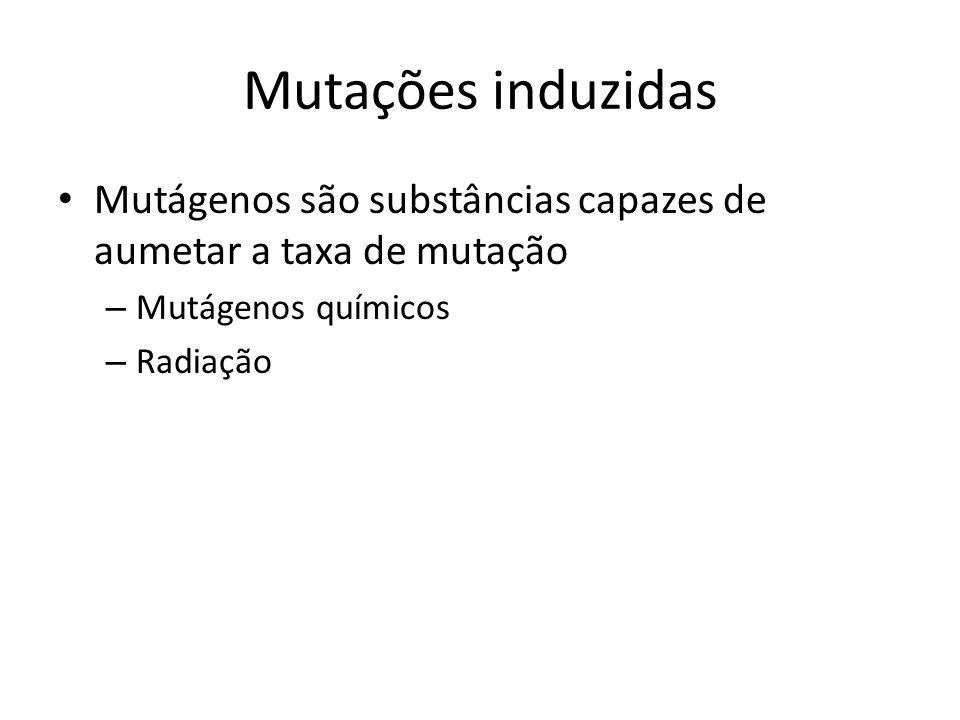 Mutações induzidas Mutágenos são substâncias capazes de aumetar a taxa de mutação. Mutágenos químicos.