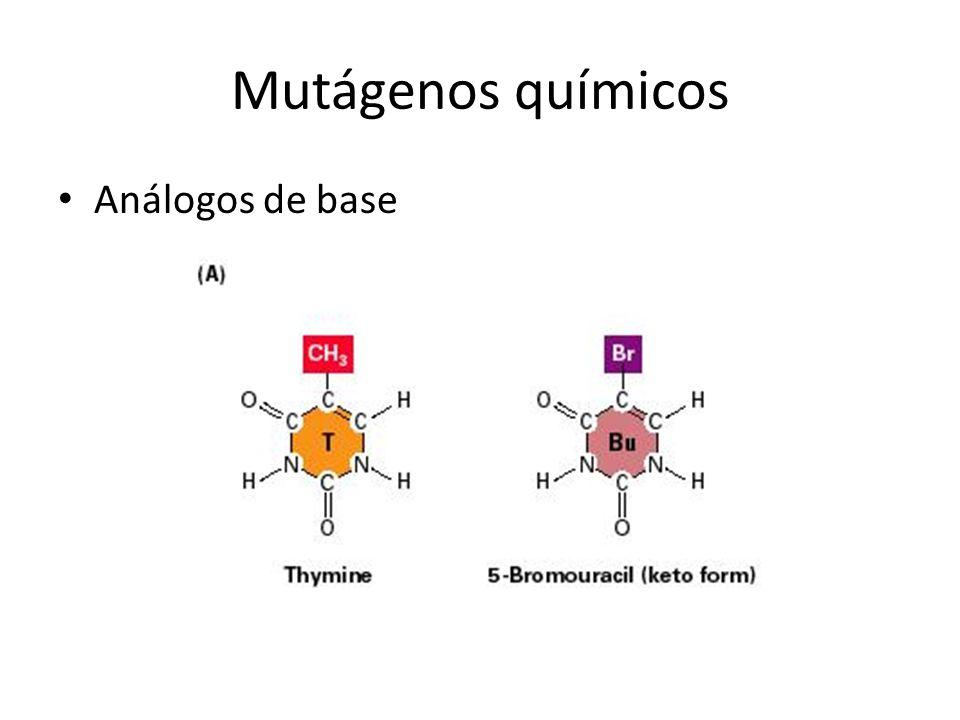 Mutágenos químicos Análogos de base