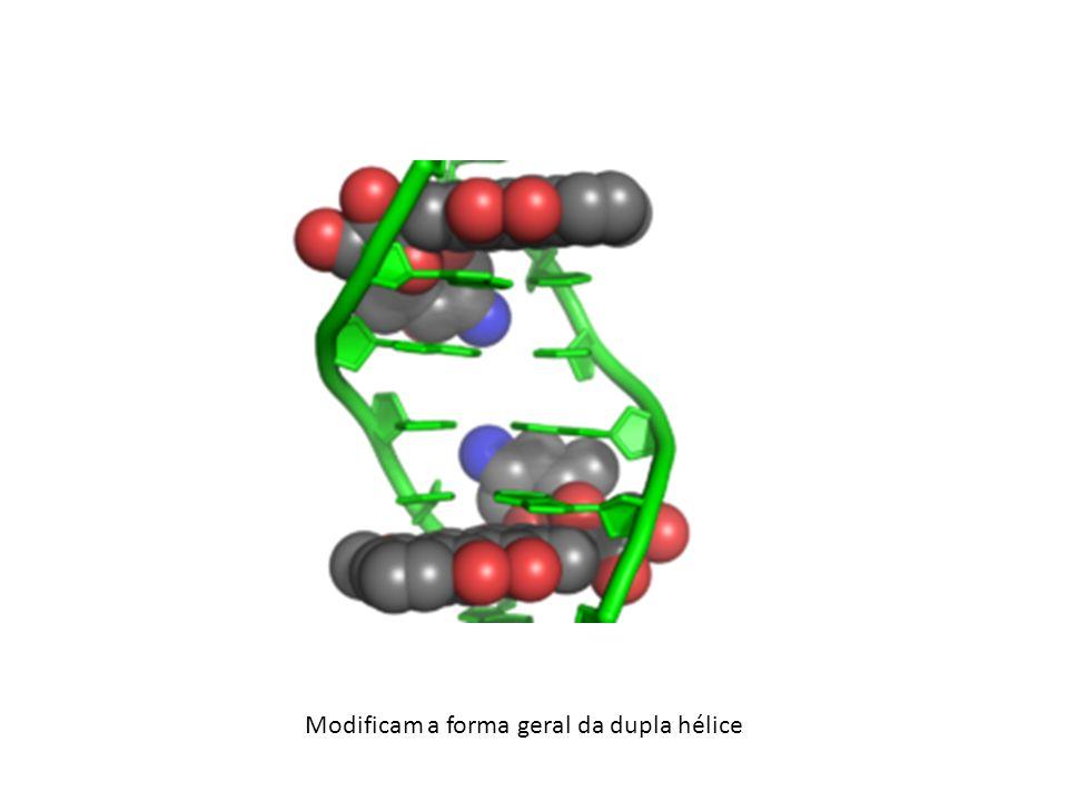 Modificam a forma geral da dupla hélice