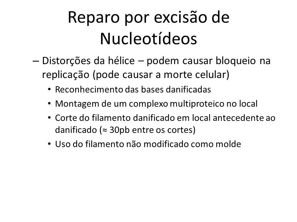 Reparo por excisão de Nucleotídeos