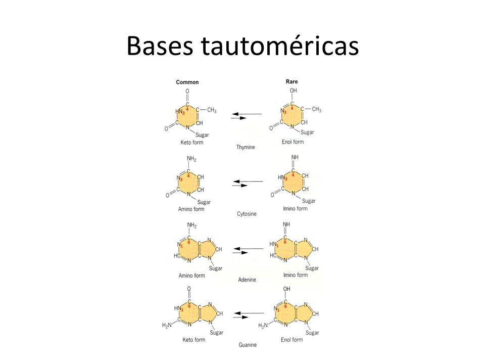 Bases tautoméricas
