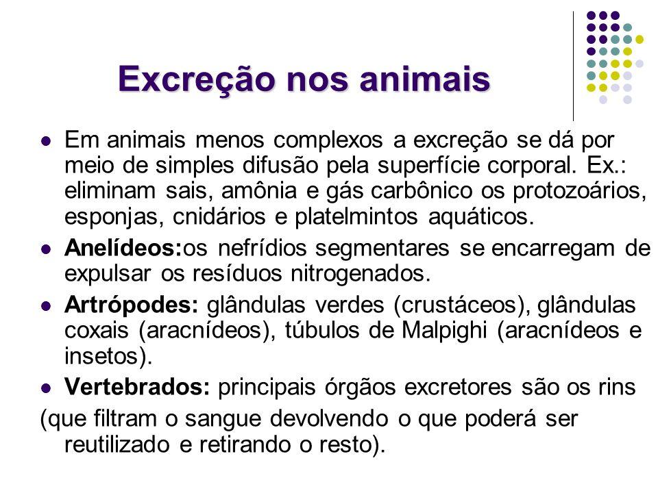 Excreção nos animais