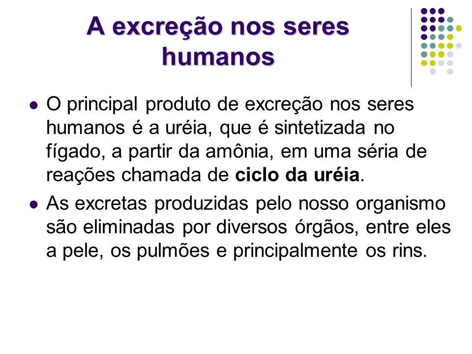 A excreção nos seres humanos