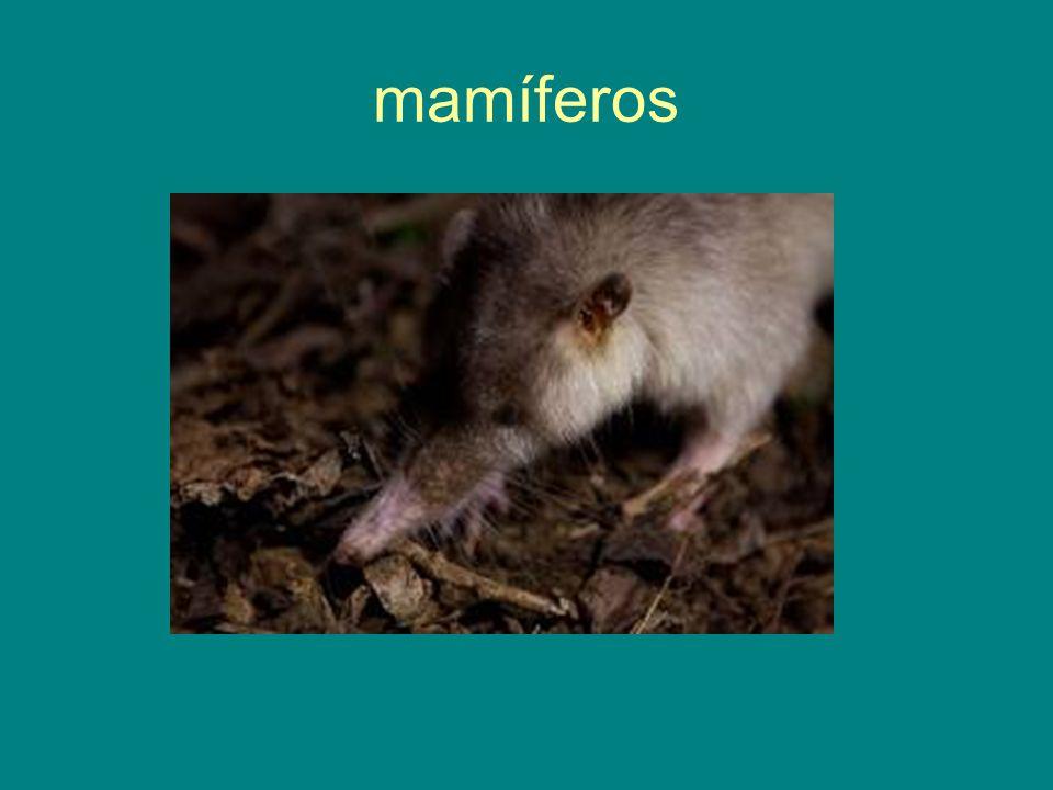 mamíferos