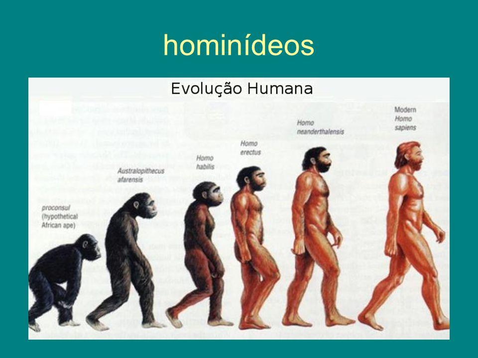 hominídeos