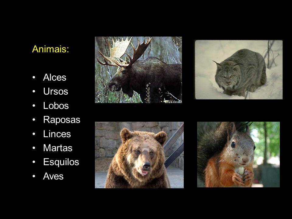 Animais: Alces Ursos Lobos Raposas Linces Martas Esquilos Aves