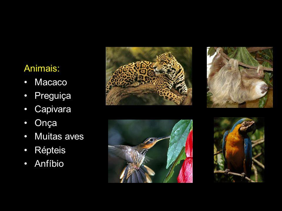 Animais: Macaco Preguiça Capivara Onça Muitas aves Répteis Anfíbio