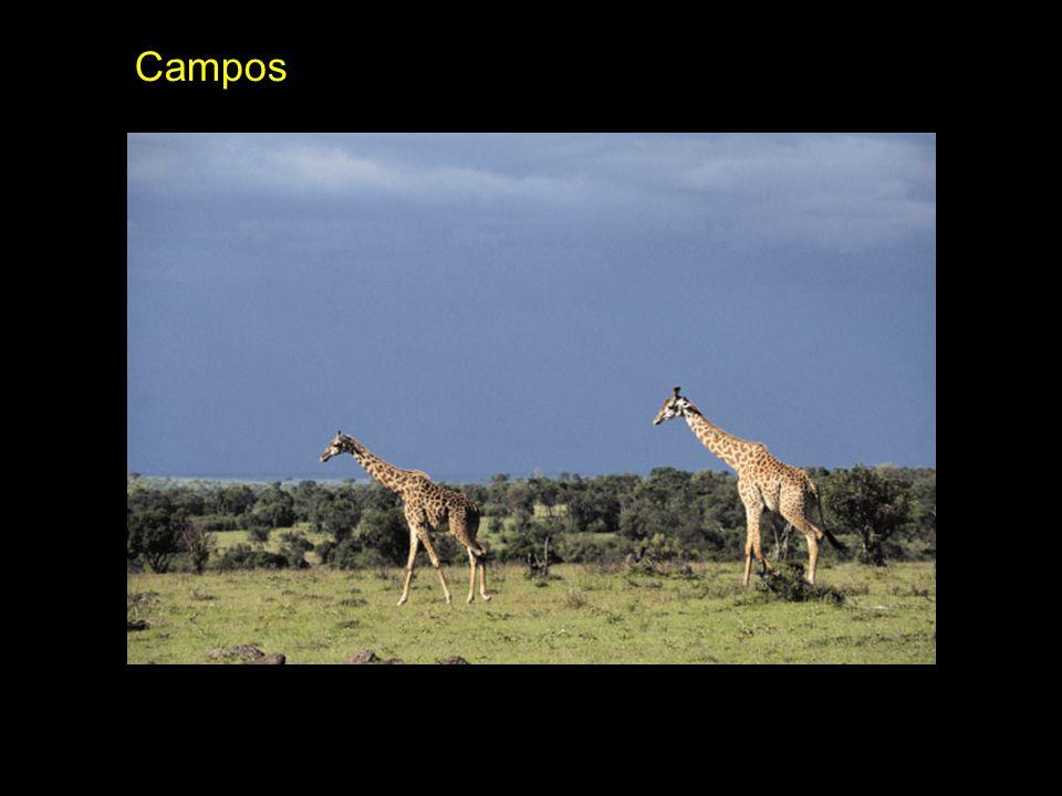 Campos Campos