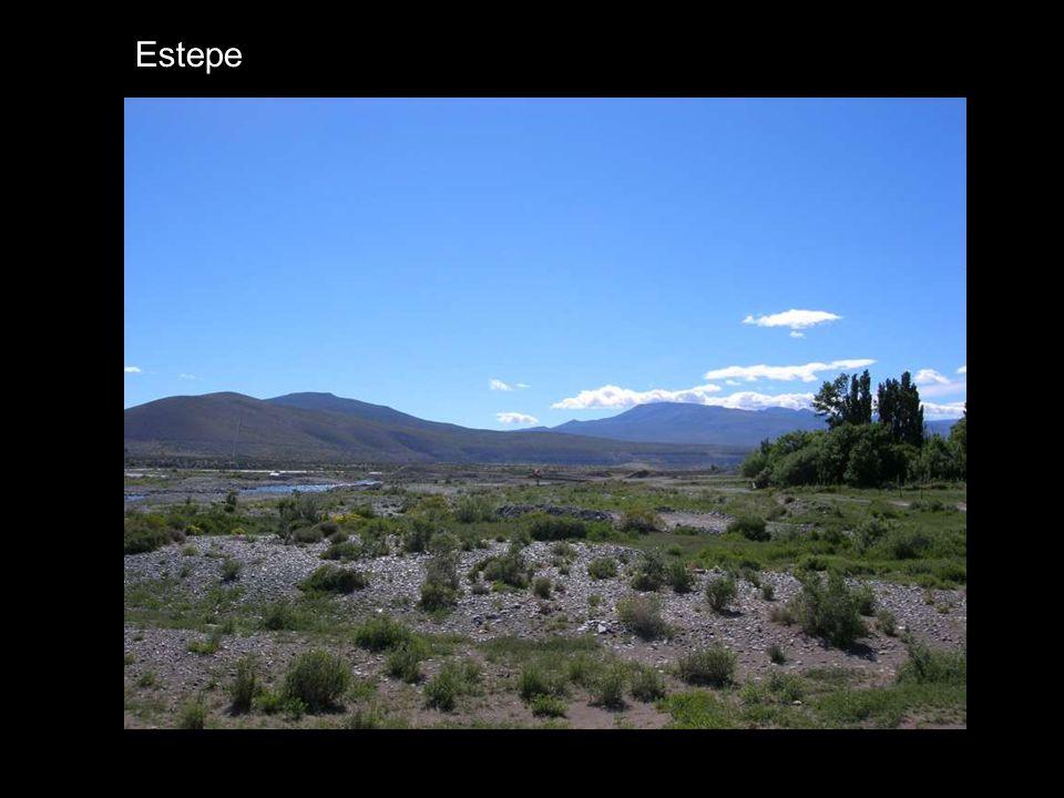 Estepe