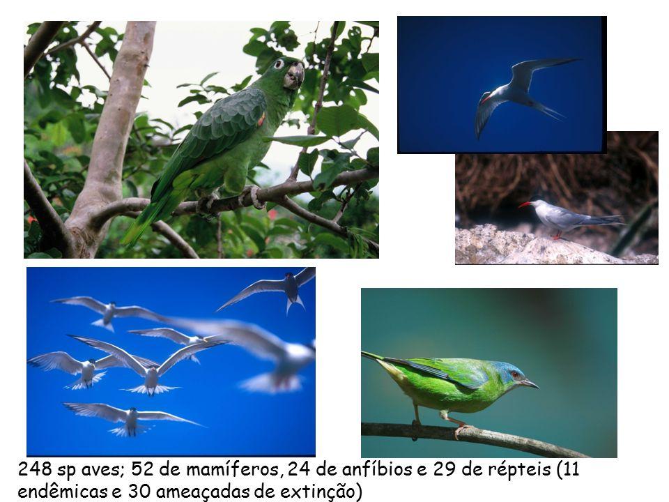 248 sp aves; 52 de mamíferos, 24 de anfíbios e 29 de répteis (11 endêmicas e 30 ameaçadas de extinção)