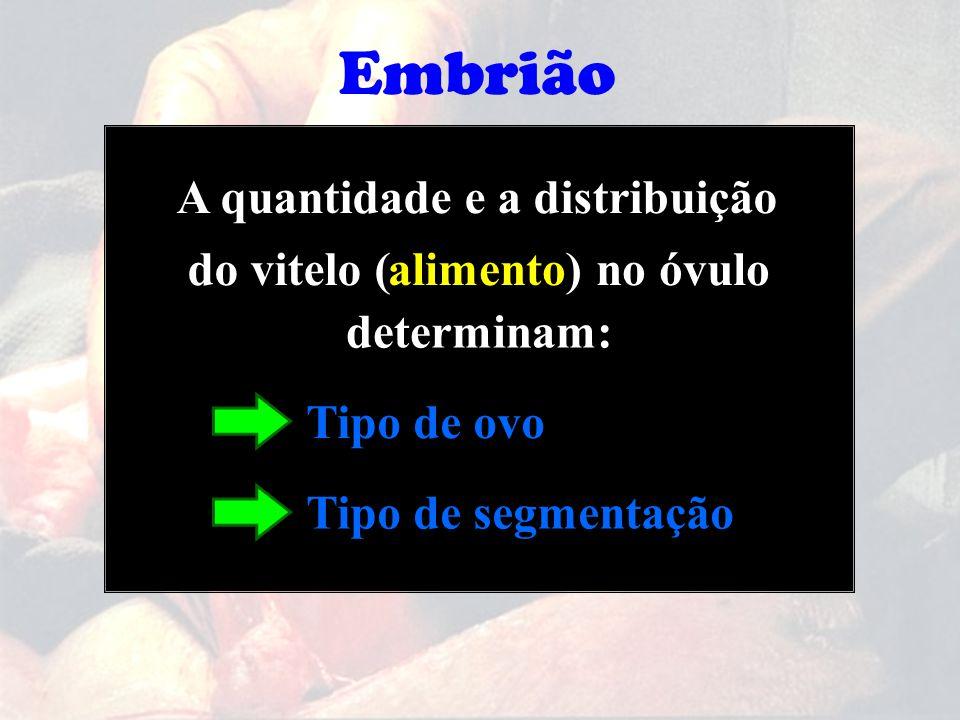 Embrião A quantidade e a distribuição do vitelo ( alimento) no óvulo