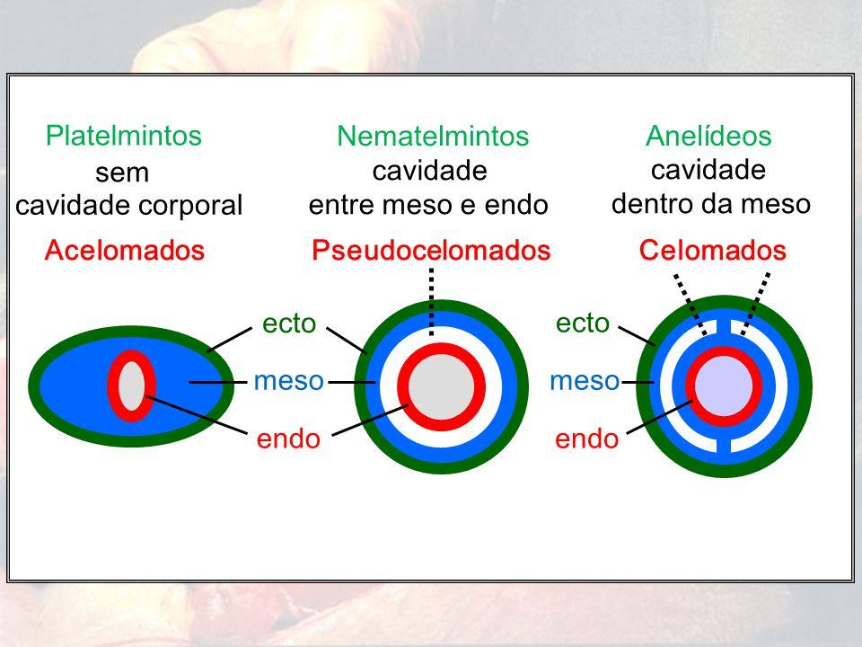 Platelmintos Nematelmintos. Anelídeos. sem. cavidade. entre meso e endo. cavidade. dentro da meso.