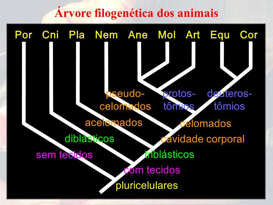 Árvore filogenética dos animais
