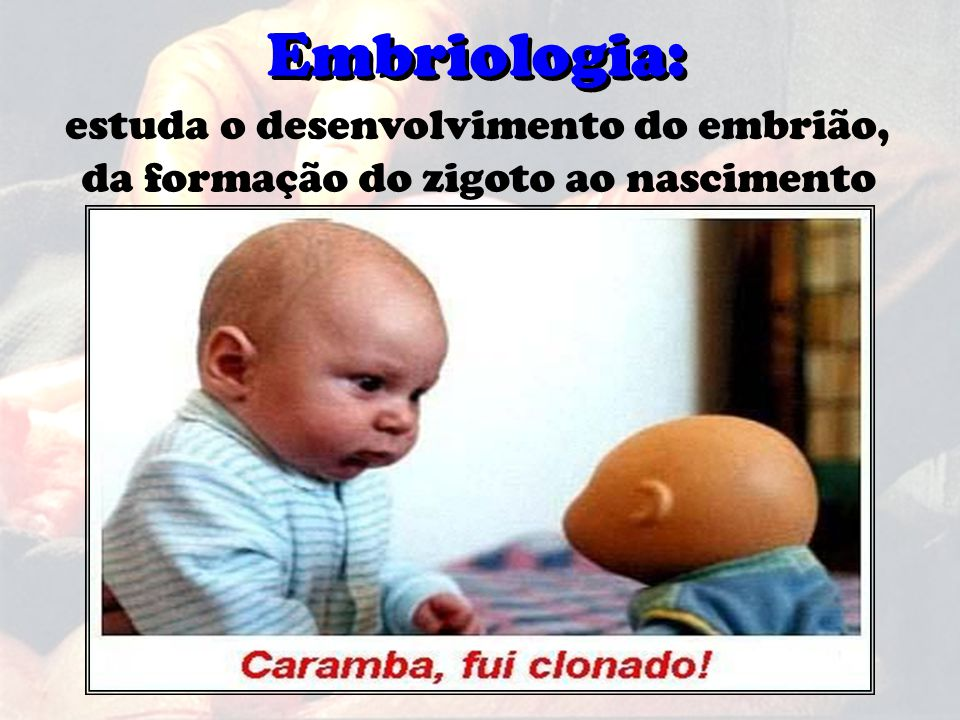 Embriologia: Embriologia: estuda o desenvolvimento do embrião,