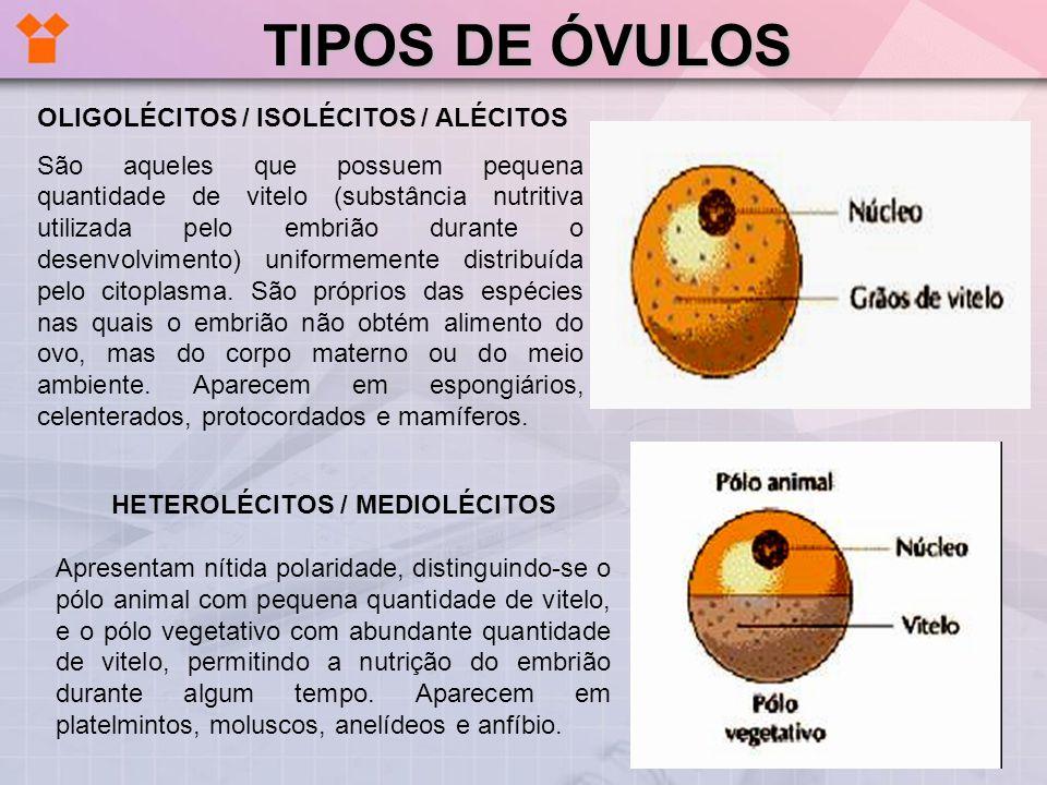 HETEROLÉCITOS / MEDIOLÉCITOS