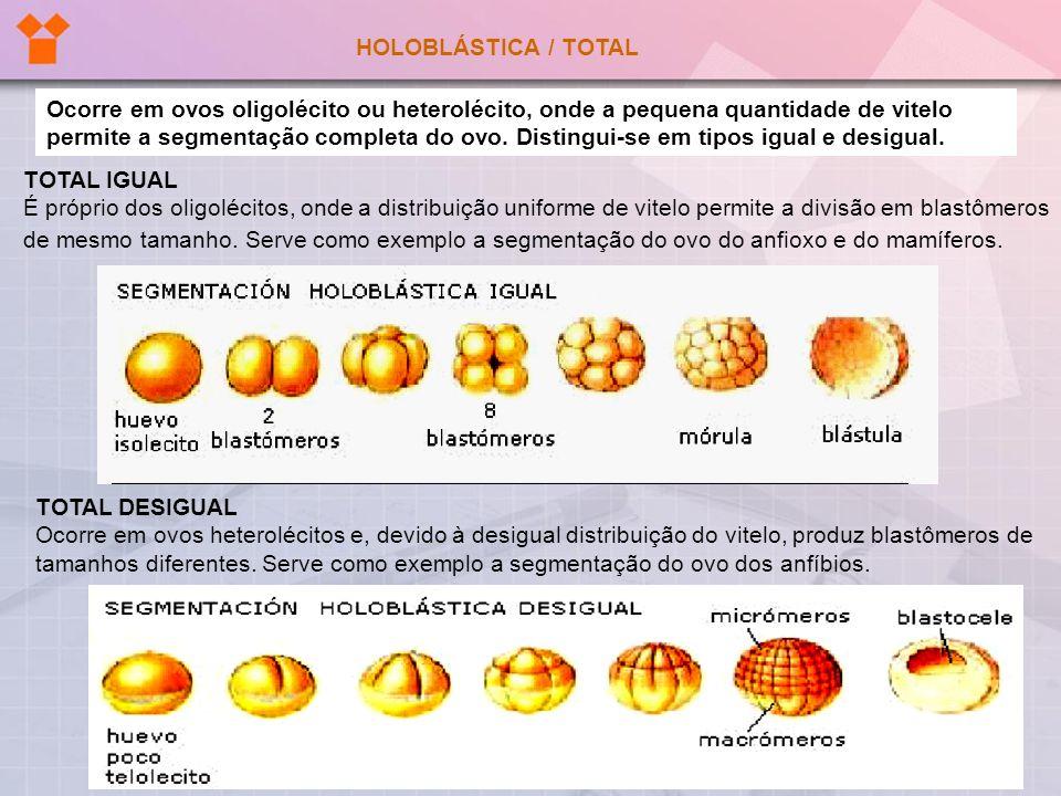 HOLOBLÁSTICA / TOTAL