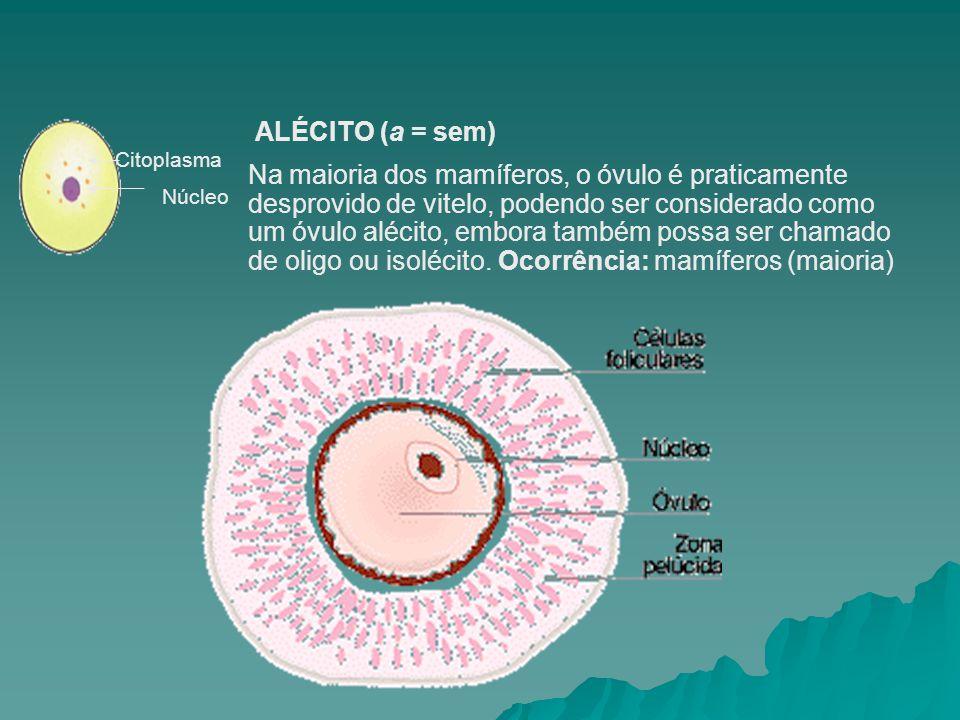ALÉCITO (a = sem) Citoplasma.