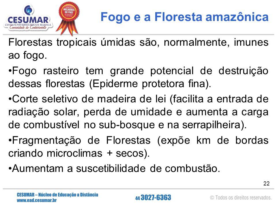 Fogo e a Floresta amazônica