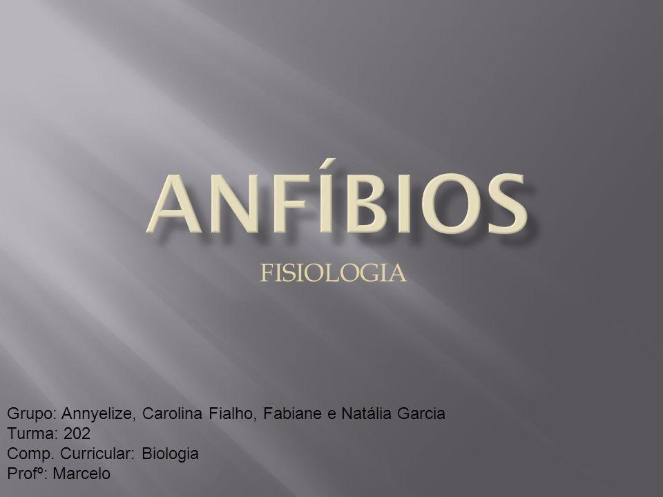 ANFÍBIOS FISIOLOGIA. Grupo: Annyelize, Carolina Fialho, Fabiane e Natália Garcia. Turma: 202. Comp. Curricular: Biologia.