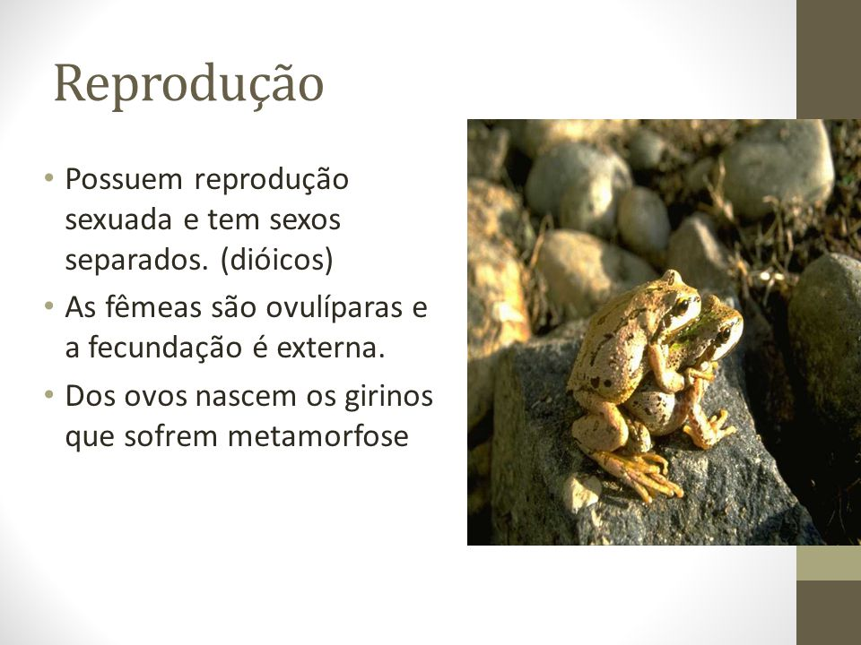 Reprodução Possuem reprodução sexuada e tem sexos separados. (dióicos)