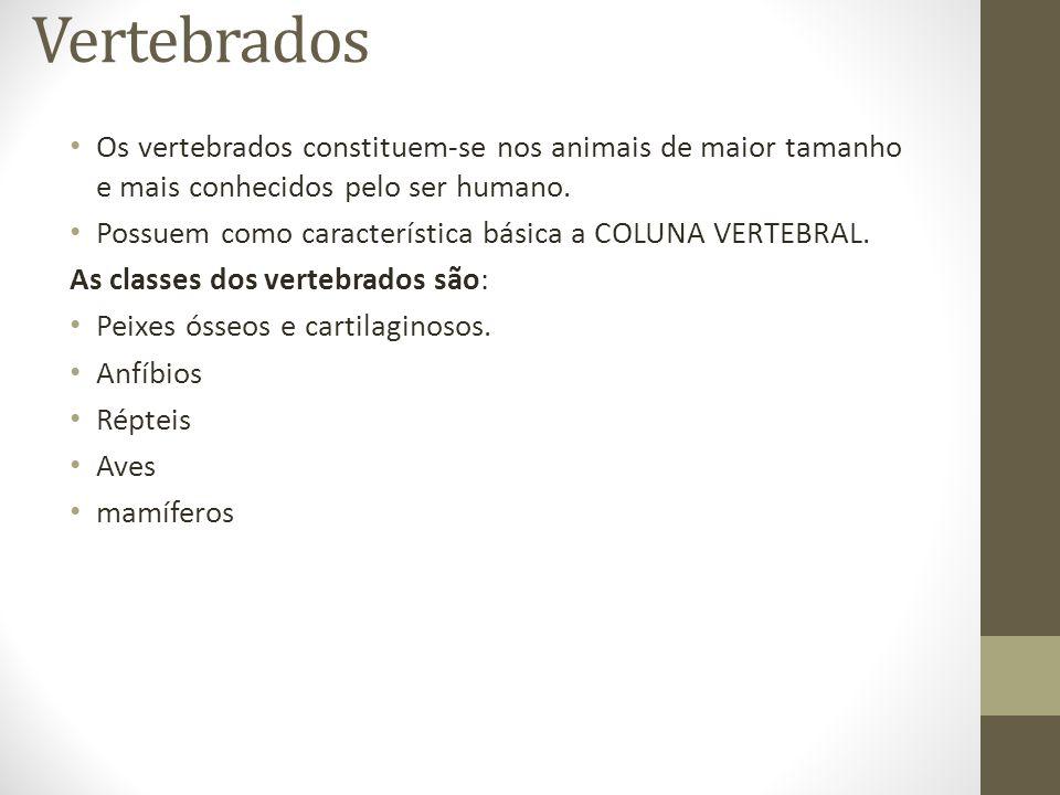 Vertebrados Os vertebrados constituem-se nos animais de maior tamanho e mais conhecidos pelo ser humano.