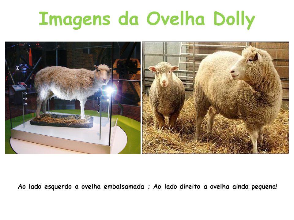 Imagens da Ovelha Dolly