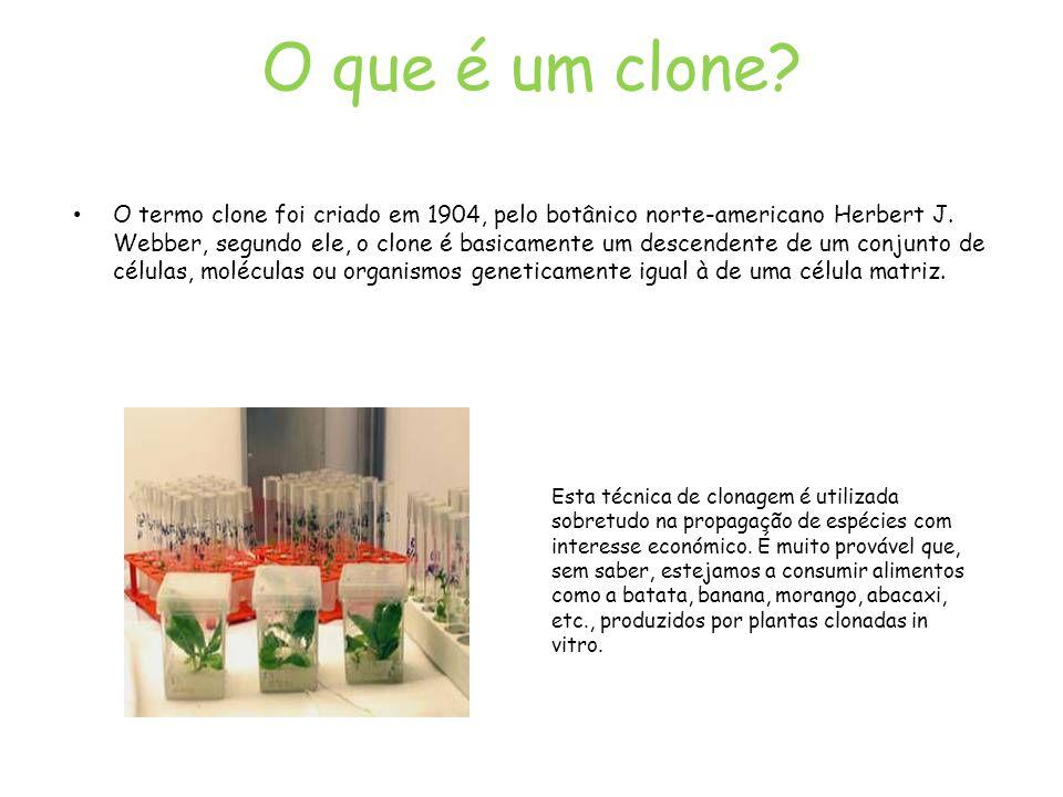 O que é um clone