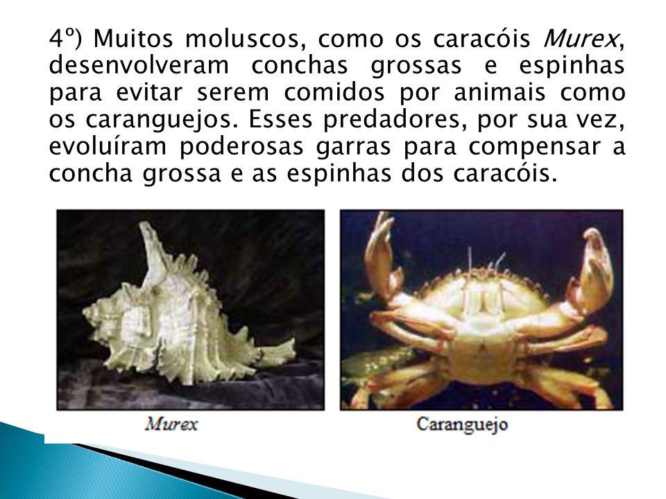 4º) Muitos moluscos, como os caracóis Murex, desenvolveram conchas grossas e espinhas para evitar serem comidos por animais como os caranguejos.