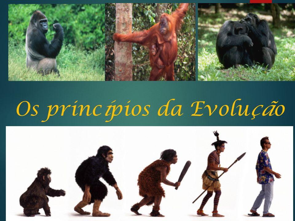 Os princípios da Evolução
