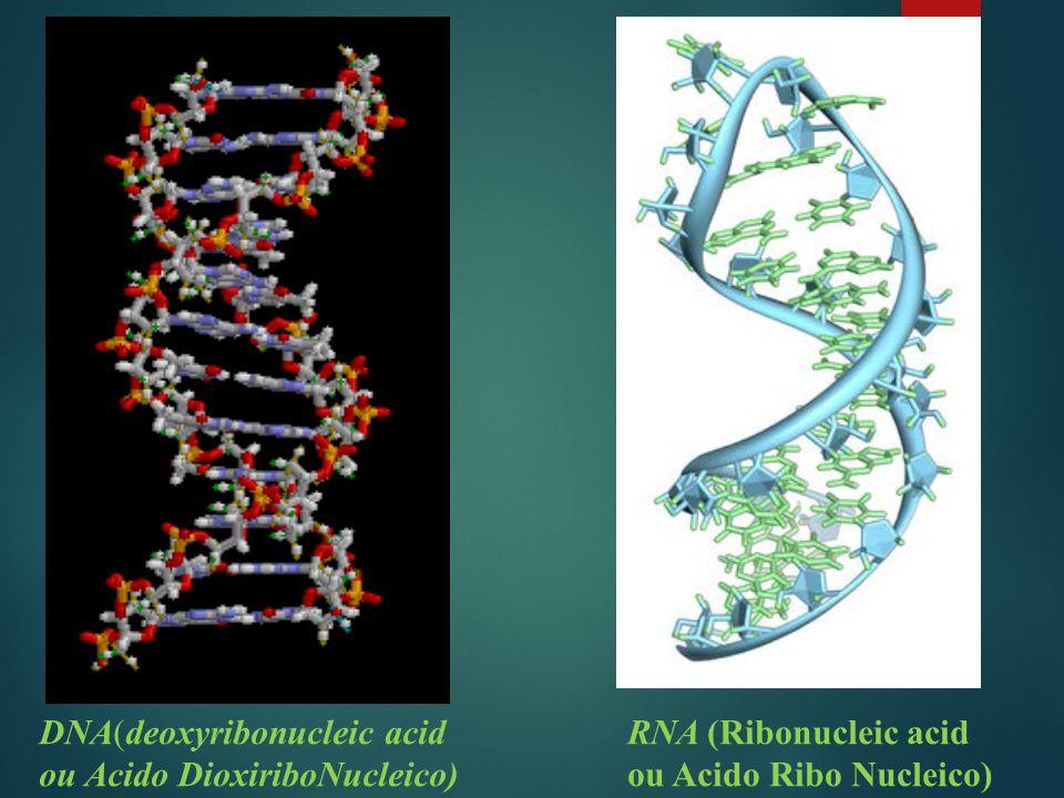 DNA(deoxyribonucleic acid