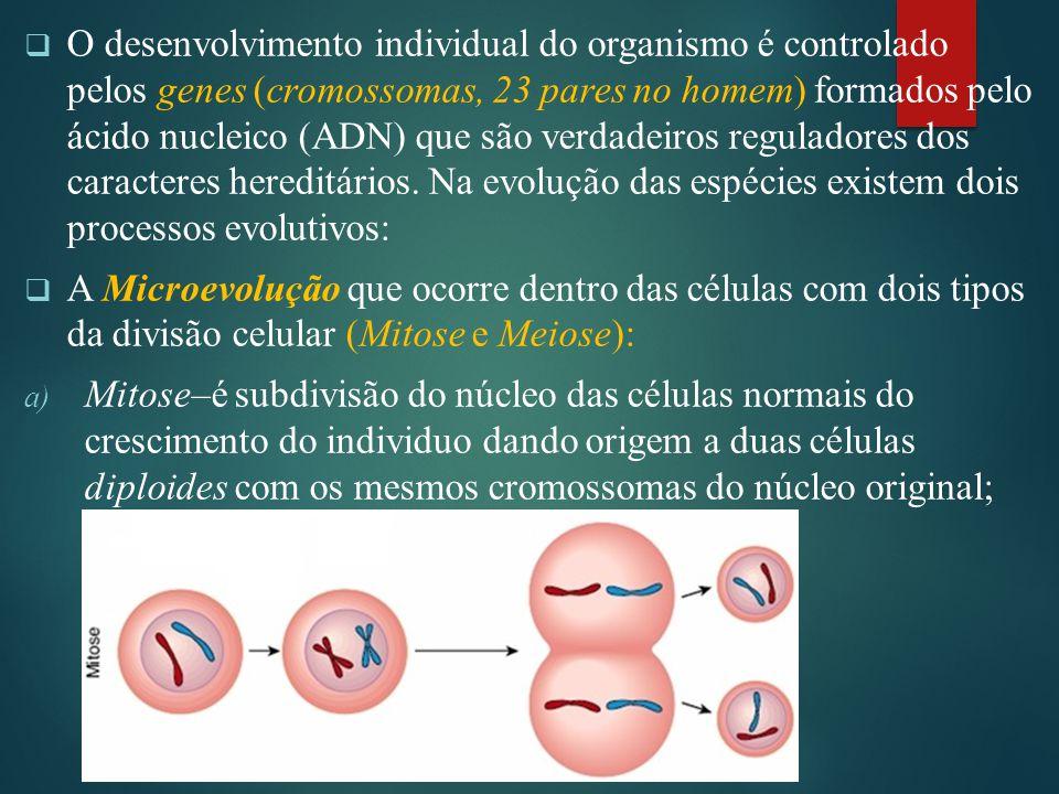 O desenvolvimento individual do organismo é controlado pelos genes (cromossomas, 23 pares no homem) formados pelo ácido nucleico (ADN) que são verdadeiros reguladores dos caracteres hereditários. Na evolução das espécies existem dois processos evolutivos: