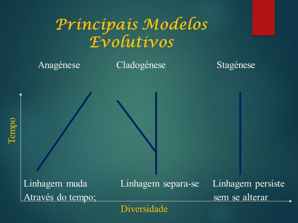 Principais Modelos Evolutivos