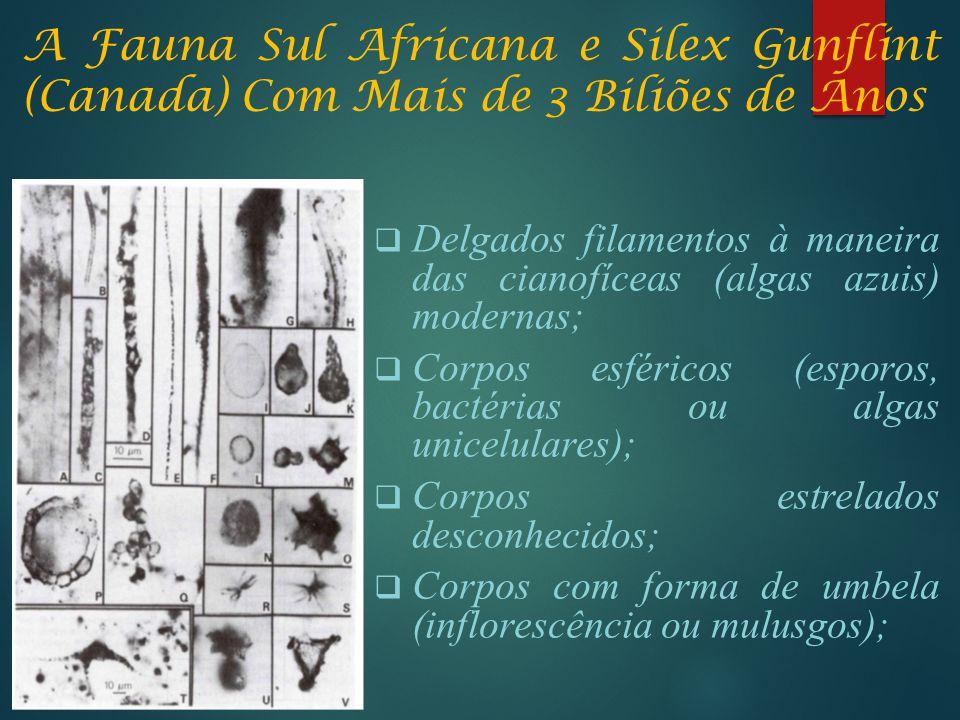 A Fauna Sul Africana e Silex Gunflint (Canada) Com Mais de 3 Biliões de Anos