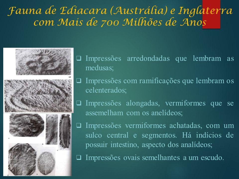Fauna de Ediacara (Austrália) e Inglaterra com Mais de 700 Milhões de Anos