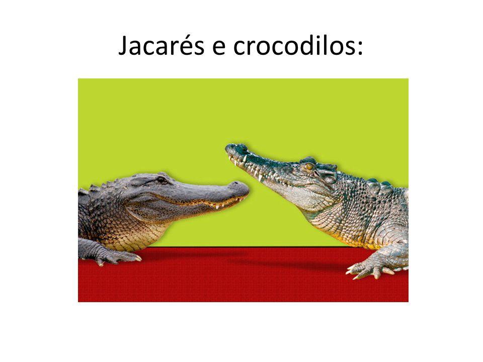 Jacarés e crocodilos: