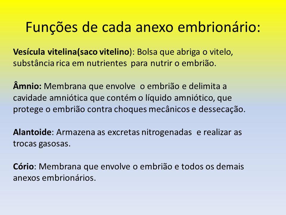 Funções de cada anexo embrionário: