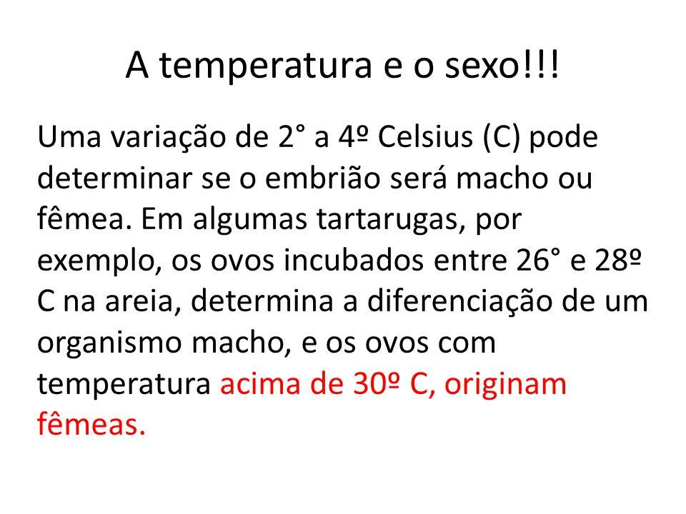 A temperatura e o sexo!!!