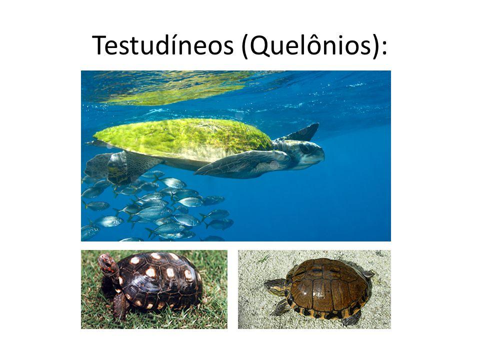Testudíneos (Quelônios):