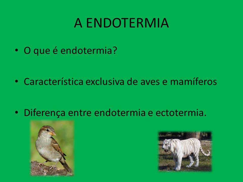 A ENDOTERMIA O que é endotermia