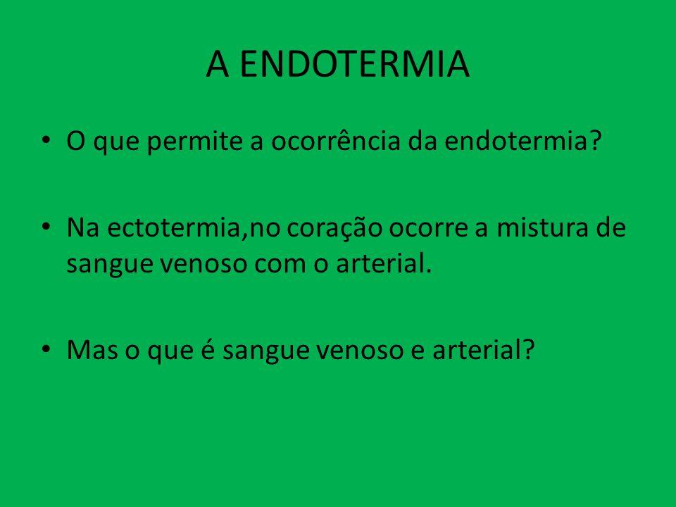 A ENDOTERMIA O que permite a ocorrência da endotermia