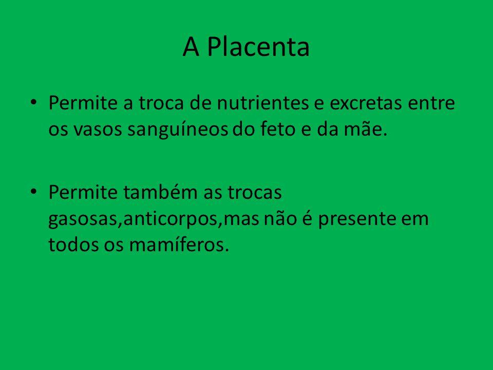 A Placenta Permite a troca de nutrientes e excretas entre os vasos sanguíneos do feto e da mãe.