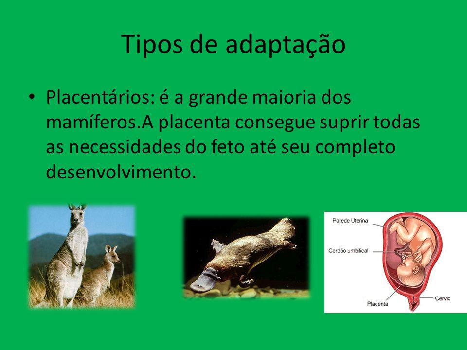 Tipos de adaptação