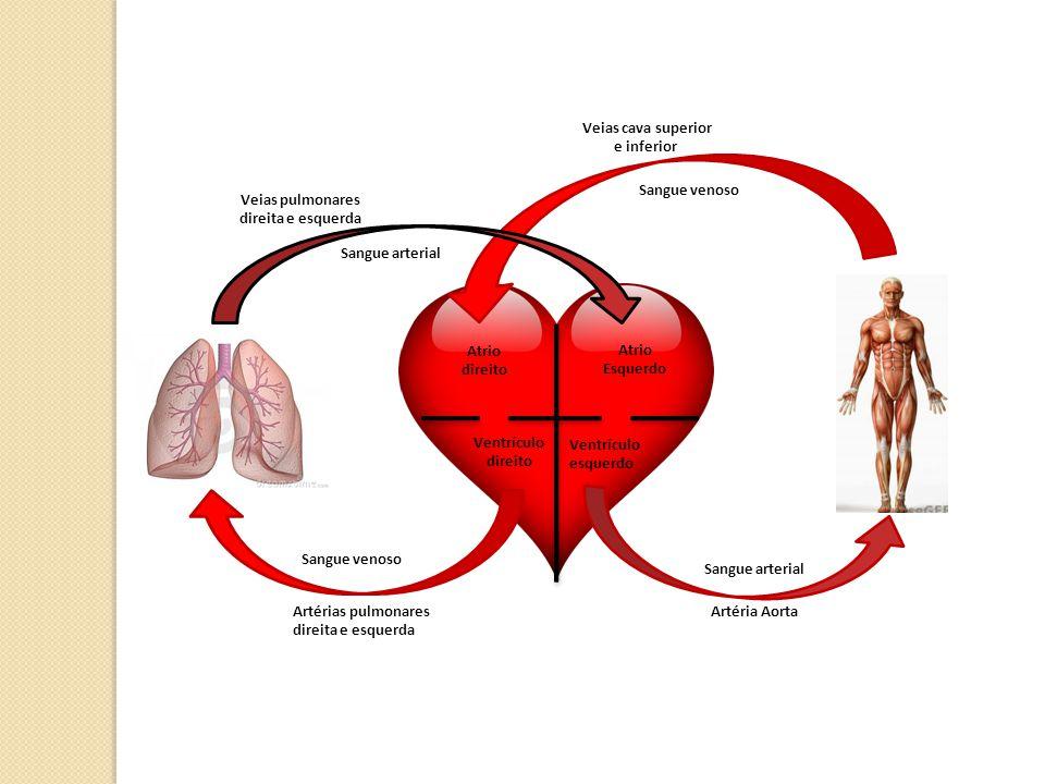 Veias pulmonares direita e esquerda