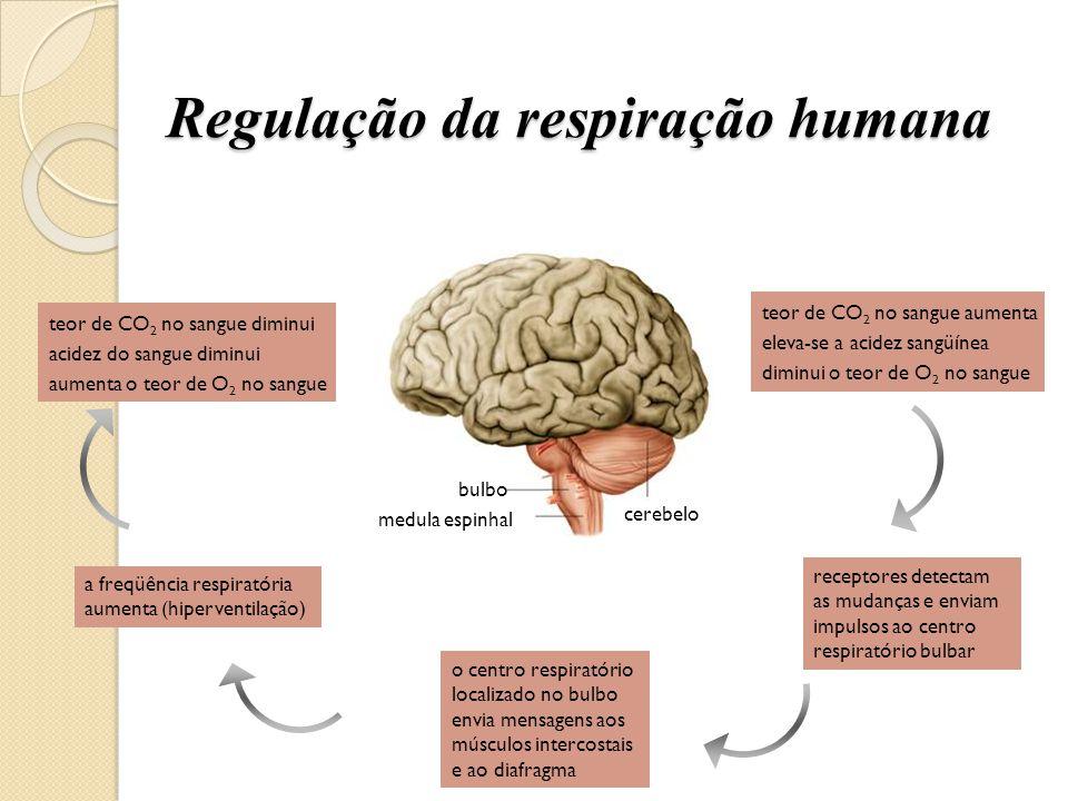 Regulação da respiração humana