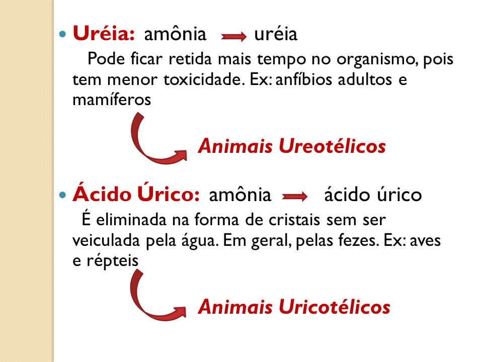 Uréia: amônia uréia Pode ficar retida mais tempo no organismo, pois tem menor toxicidade. Ex: anfíbios adultos e mamíferos.