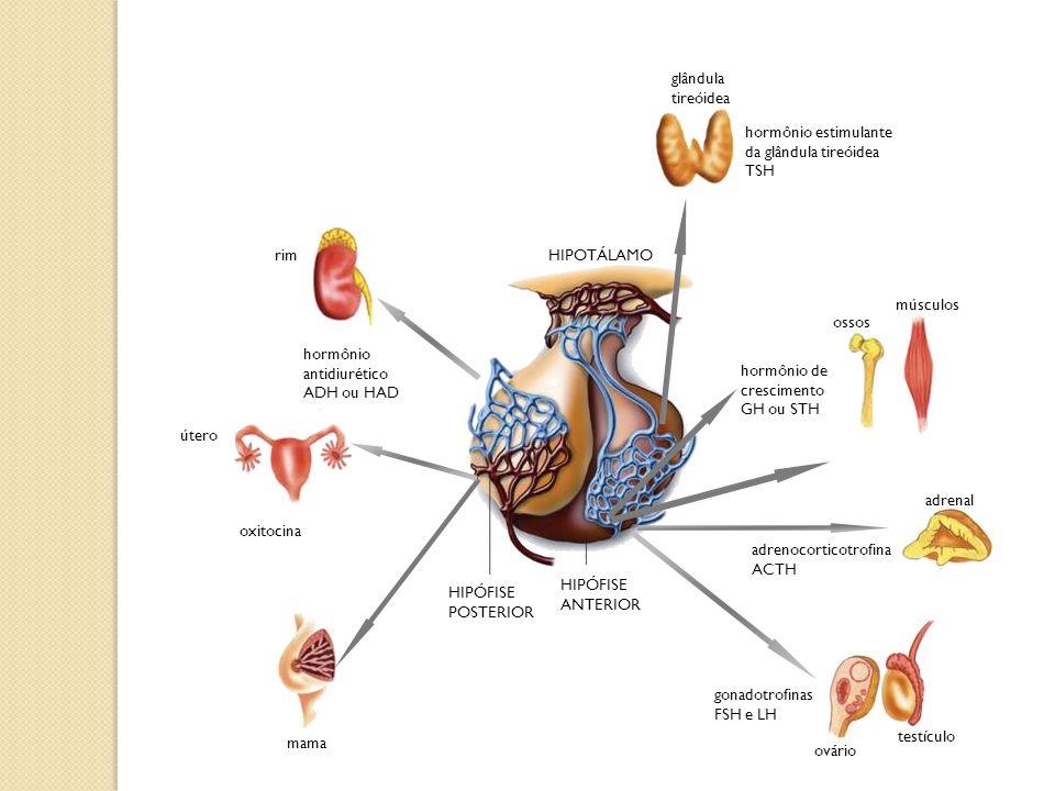 hormônio estimulante da glândula tireóidea
